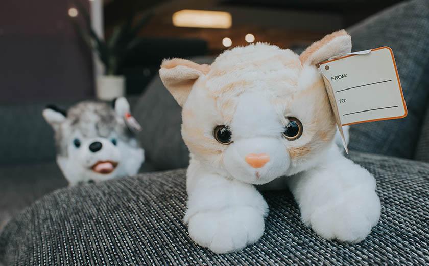 Kavč privlači tudi domače živali