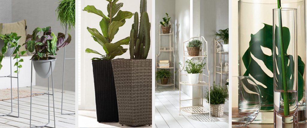 Modne sobne rastlin